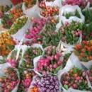 Tulpen-150x150